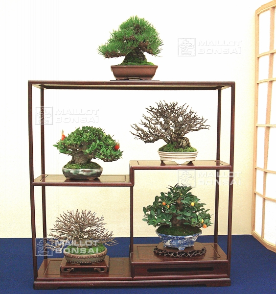 presentation-de-mini-bonsai