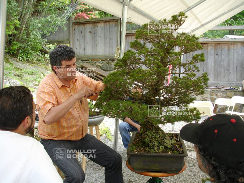 demonstration-bonsai-new-york-mai-2008